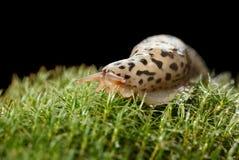 Slug on moss Stock Image