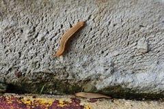 Slug pair 1 Royalty Free Stock Image