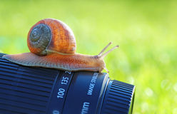 Slug photographer Royalty Free Stock Photos