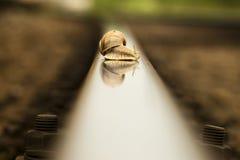 Slug on rail. After rain Royalty Free Stock Image