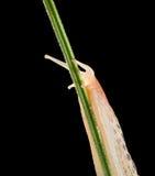 Slug's  stare Royalty Free Stock Photo