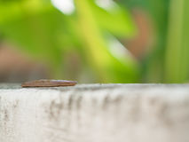 A slug slow walking on the wall with soft focus background Royalty Free Stock Photo