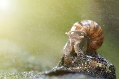 Slug or snail crawling slowly in the garden. Snail is a common name loosely applied to shelled gastropods Royalty Free Stock Image
