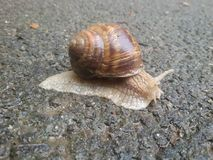 Slug Stock Image