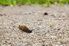 Slug Stock Photos