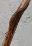 Slug on a stick. A big slug on a stick Stock Image