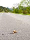 Slug the traveler Stock Photo