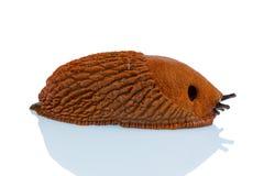 Slug on a white background Royalty Free Stock Images