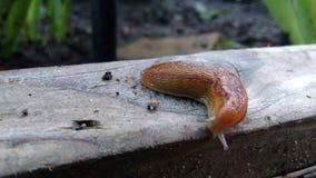 Slug stock images