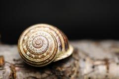 Slug on wood royalty free stock images