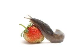 Slug-worm Royalty Free Stock Images