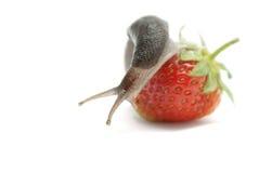 Slug-worm Stock Image