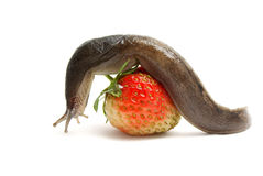 Slug-worm stock photography