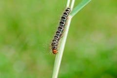 Slug worm on grass Royalty Free Stock Photography