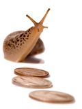 Sluggish Market Stock Images
