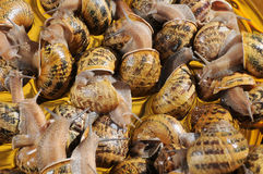 Slugs Imagem de Stock Royalty Free