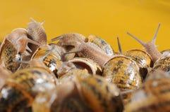 Slugs Fotografia de Stock