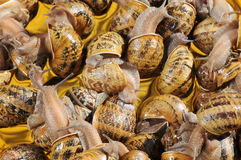 Slugs Imagens de Stock Royalty Free