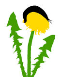 Slugs on dandelion Stock Image