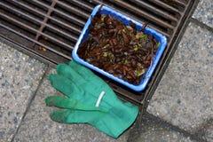 Slugs in the garden Stock Photos