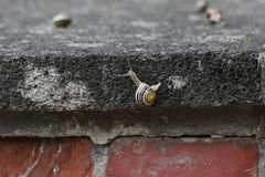Slugs On Stone Stock Image