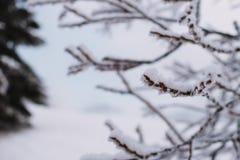 Sluit bevroor omhoog boom in de berg, de winterachtergrond stock foto's