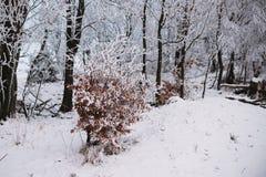 Sluit bevroor omhoog boom in de berg, de winterachtergrond stock afbeelding
