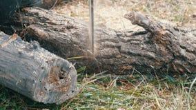 Sluit boomstammen van de besnoeiingen omhoog de droge boom met rode kettingzaag, zaagselvlieg overal stock video