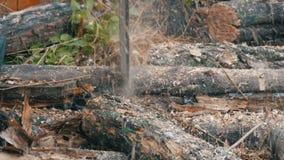 Sluit boomstammen van de besnoeiingen omhoog de droge boom met rode kettingzaag, zaagselvlieg overal stock footage