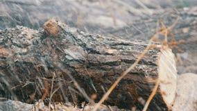 Sluit boomstammen van de besnoeiingen omhoog de droge boom met rode kettingzaag, zaagselvlieg overal stock videobeelden