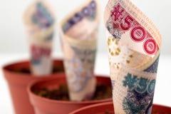 Sluit drie omhoog Nigeriaans bankbiljettengeld Vijf honderd naira nota's in bloempotten voor financieel investering en besparinge royalty-vrije stock foto's