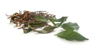 Sluit fesh omhoog groene theebladen met ochtendgloed Royalty-vrije Stock Foto