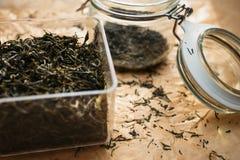Sluit fesh omhoog groene theebladen met ochtendgloed Royalty-vrije Stock Foto's