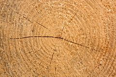 Sluit gekweekt hout Stock Afbeeldingen