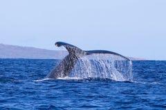 Sluit Humbpack-omhoog het Druipende Water van de Walvisstaart Duikend in Overzees stock foto's