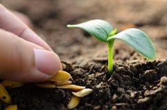 Sluit landbouwer omhoog geselecteerd zaad voor het planten Stock Afbeeldingen