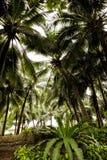 Sluit omhoog abstracte palmenachtergrond in openbaar park van Bangko royalty-vrije stock foto's