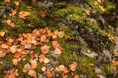 Sluit omhoog beautyful mos in de herfst bos Oude grijze stenen met groen mos en de sinaasappel gevallen verlaat textuurachtergron stock foto