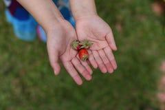 Sluit omhoog beeld van aardbei op jonge meisjeshanden Royalty-vrije Stock Foto's