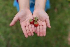 Sluit omhoog beeld van aardbei op jonge meisjeshanden Stock Afbeelding
