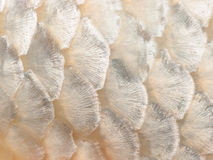 Sluit omhoog beeld van vissenschaal Stock Afbeeldingen
