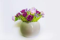 Sluit omhoog bloem in de witte pot Royalty-vrije Stock Foto's