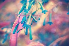 Sluit omhoog bloem in de zacht-nadrukfoto Stock Foto's