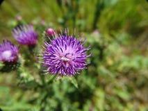 Sluit omhoog bloemen Royalty-vrije Stock Foto's