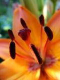 Sluit omhoog bloemen Royalty-vrije Stock Foto