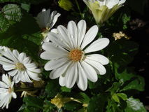 Sluit omhoog bloemen Stock Afbeeldingen