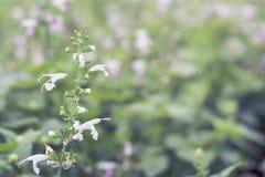 Sluit omhoog bloemenachtergrond Royalty-vrije Stock Afbeeldingen