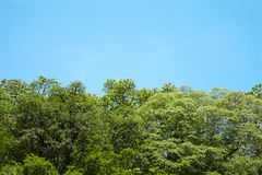Sluit omhoog boom en blauwe hemel Royalty-vrije Stock Foto's