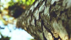 Sluit omhoog boom in het bos royalty-vrije stock afbeeldingen