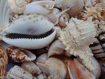 Sluit omhoog combo van overzeese shells met texturen Achtergrond behang stock afbeelding